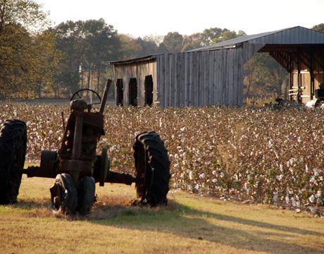 Cotton Time