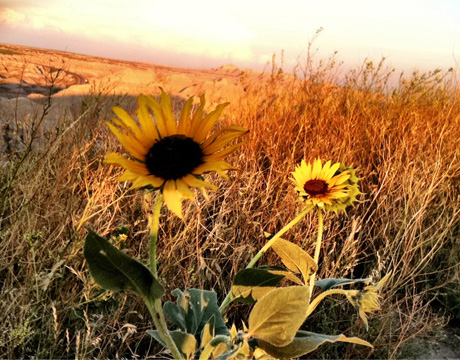Life In The Badlands